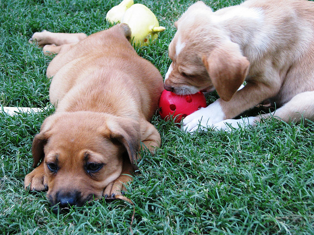 Free Puppies Austin Texas Craigslist - Puppy And Pets